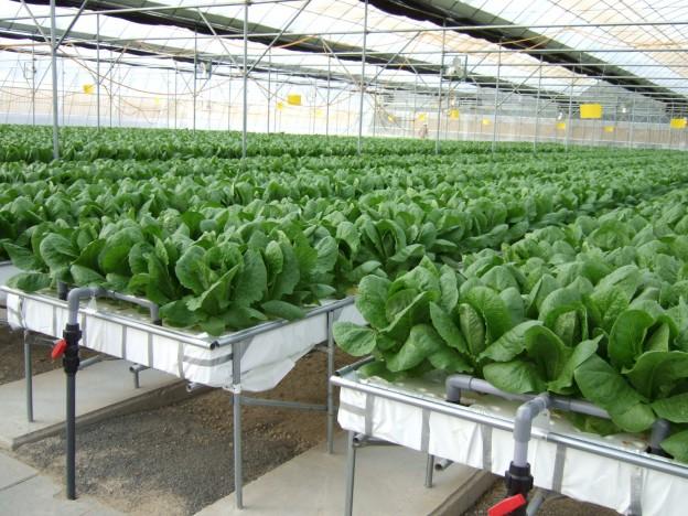 hydroponic greenhouses
