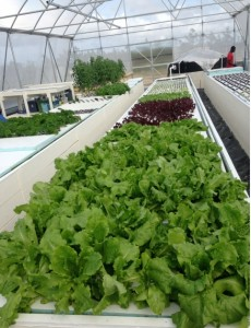 Environmental Control Systems in Greenhouses