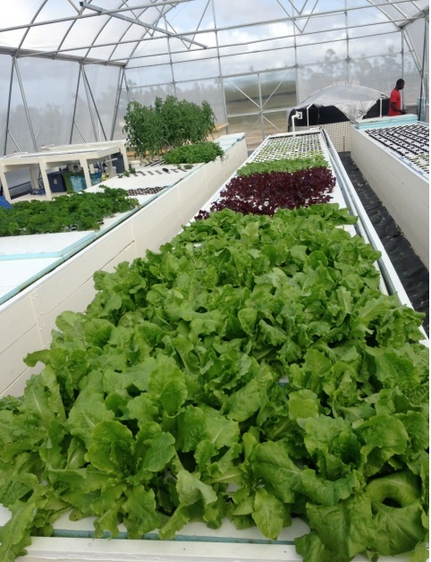 Maintaining Optimum Climate Control in the Greenhouse | Gothic ...