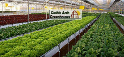 Delightful Best Vegetables To Grow In A Greenhouse