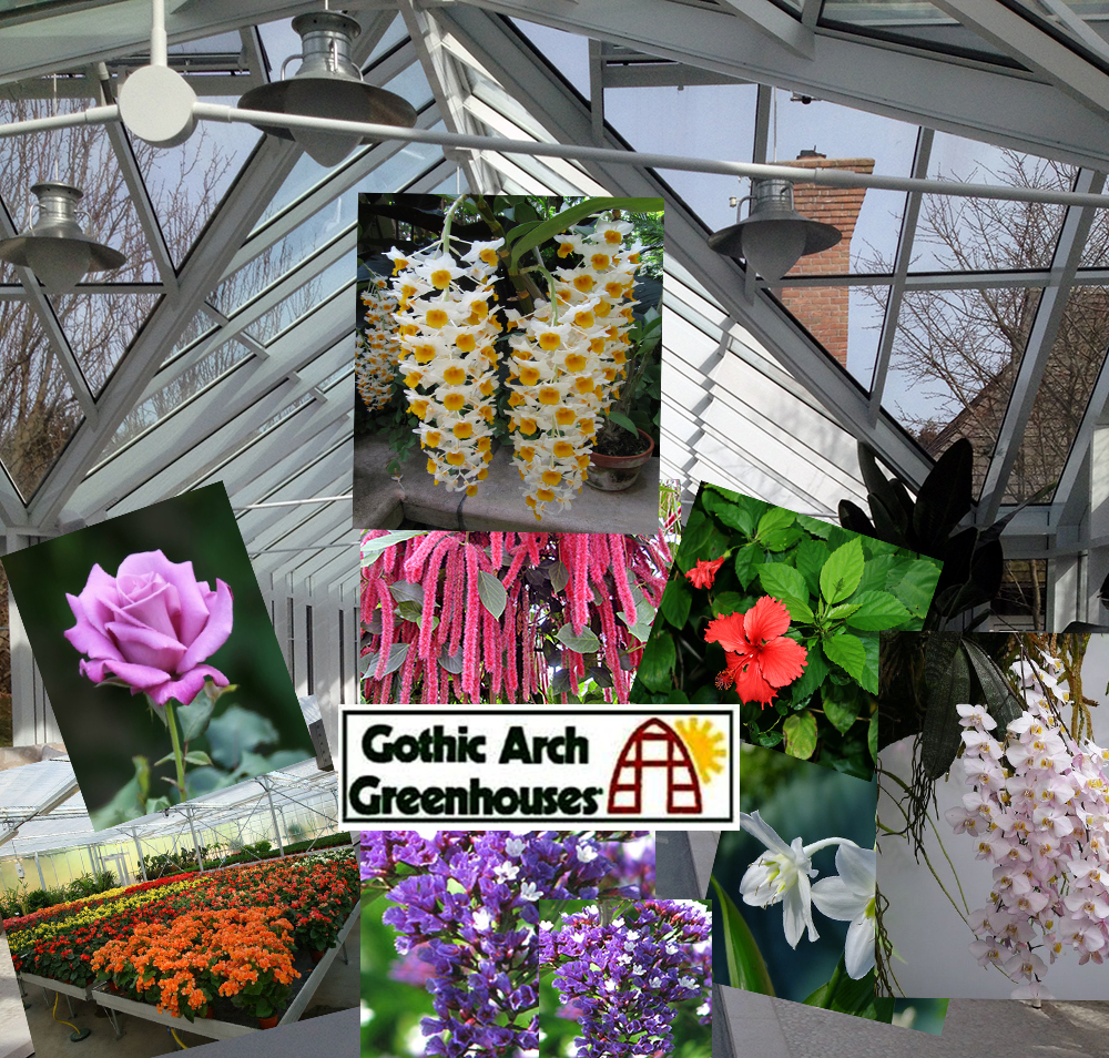 6 types of flowers to grow in your greenhouse gothic arch 6 types of flowers to grow in your greenhouse mightylinksfo