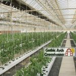 Hydroponic Winter Gardening Gothic Arch Greenhouse