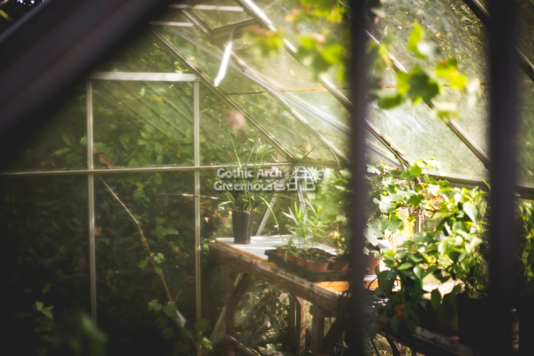 Organizing Your Greenhouse