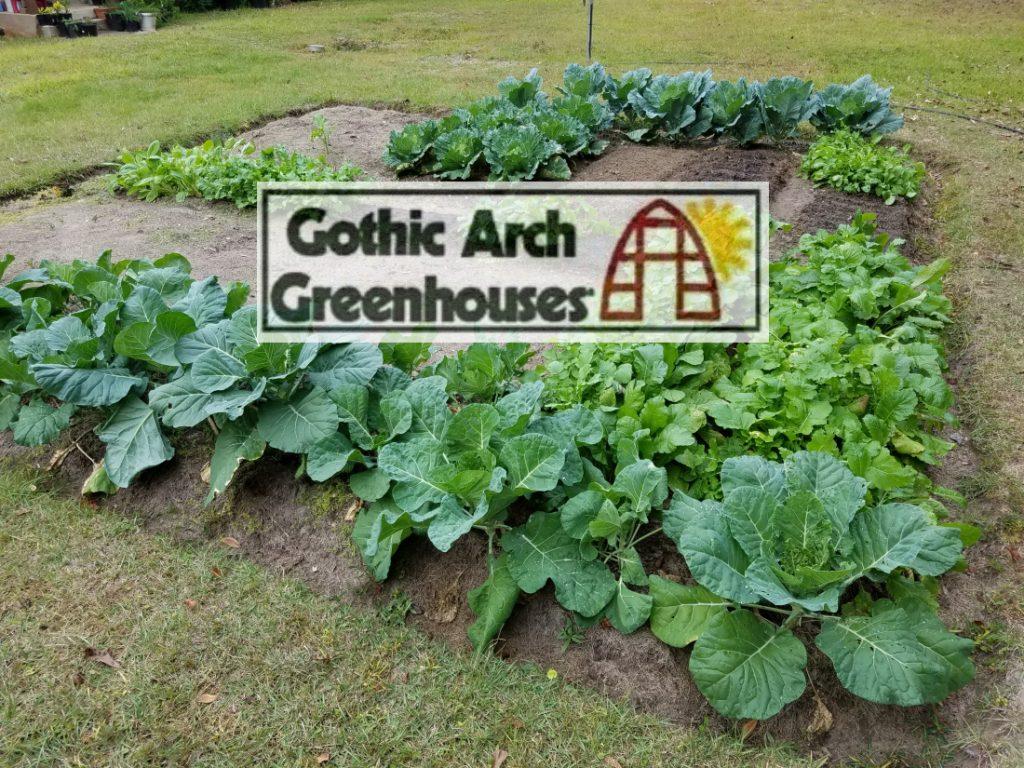 Gothic Arch - Winter Garden