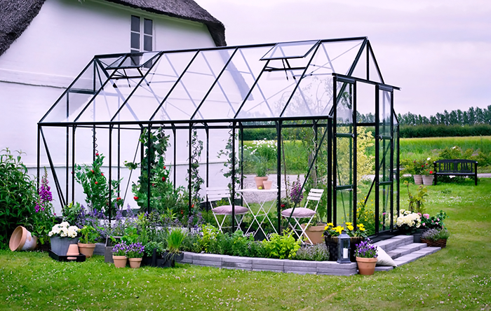 Growing Roses in a Greenhouse