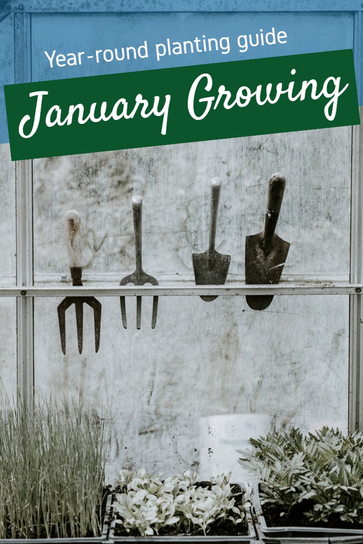 Planting calendar for year-round growing