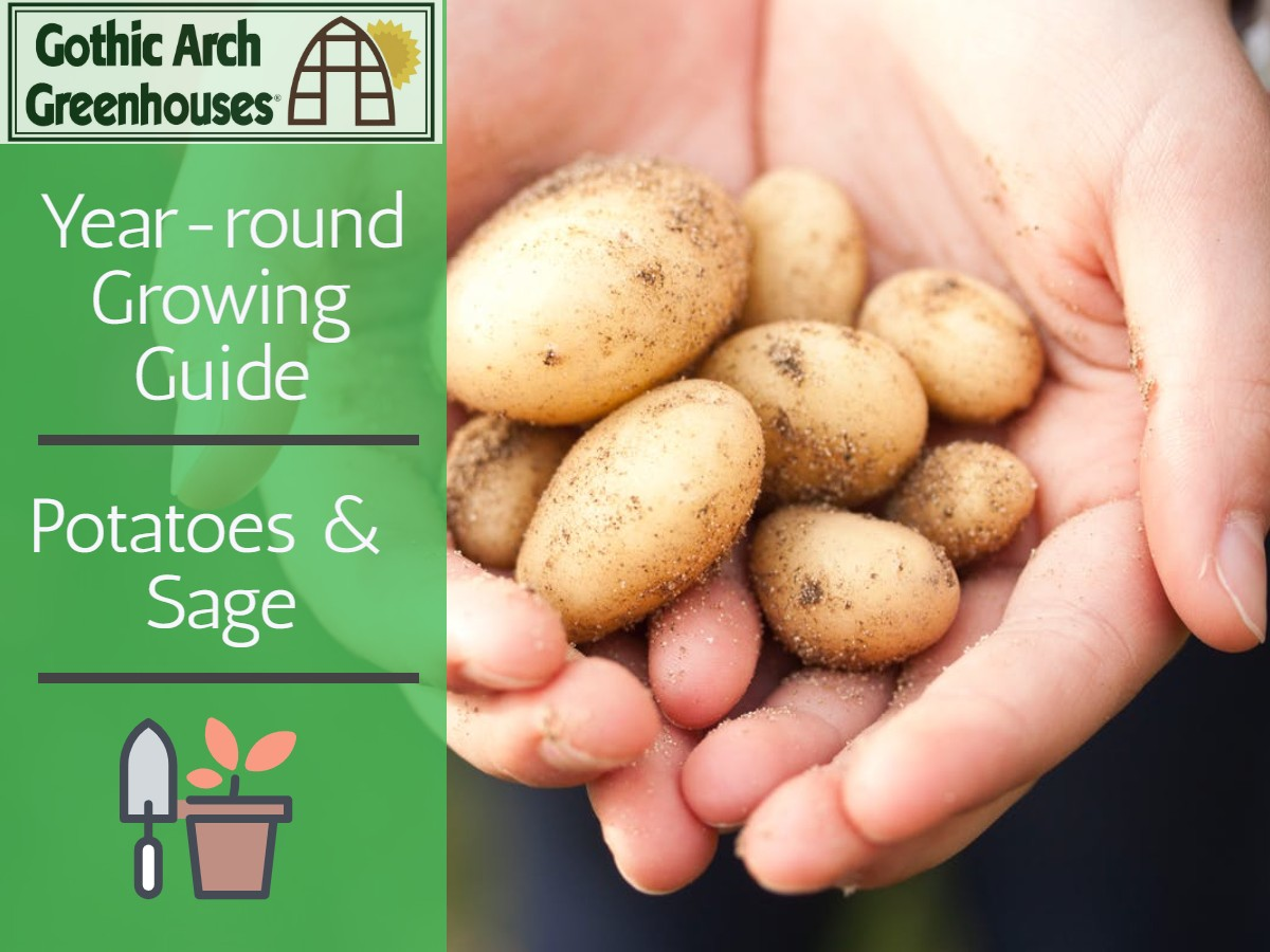 Growing Potatoes in February
