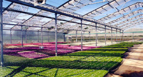 Retractable Roof Greenhouse-Aframe Greenhouses