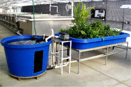 Aquaponics System Sale Commercial Greenhouse Supplies