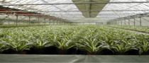 Greenhouses kits on sale, supplies, bk greenhouse  for professional Grower