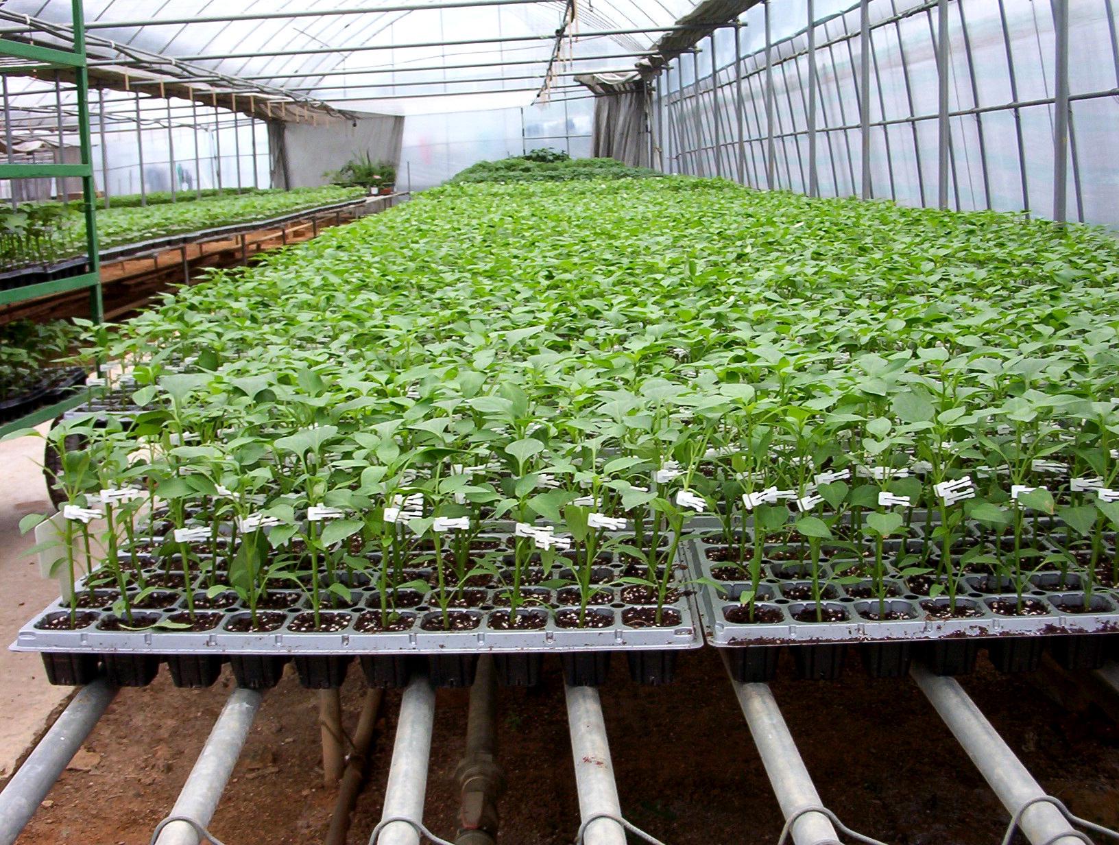 Bk Greenhouse Nursery
