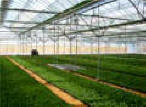 Professional Greenhouses-BK-Greenhouse kits is are professinal design for grower by Gothic Arch Greenhouses