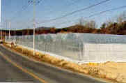 Commercial Greenhouse - Plastic greenhouses