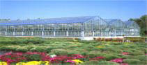 Greenhouse  - DF Series  Excels in World Class