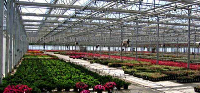 DF Production Greenhouses