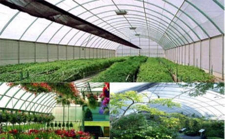 Greenhouse Poly Films-Tufflite Poly Films