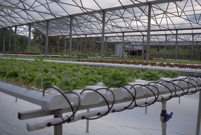 Hydroponic Greenhouse Systems Gothic Arch Greenhouses