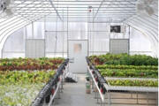 RGS Hydroponic Greenhouse