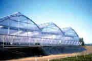Commercial Greenhouse  - Arch Series 6500