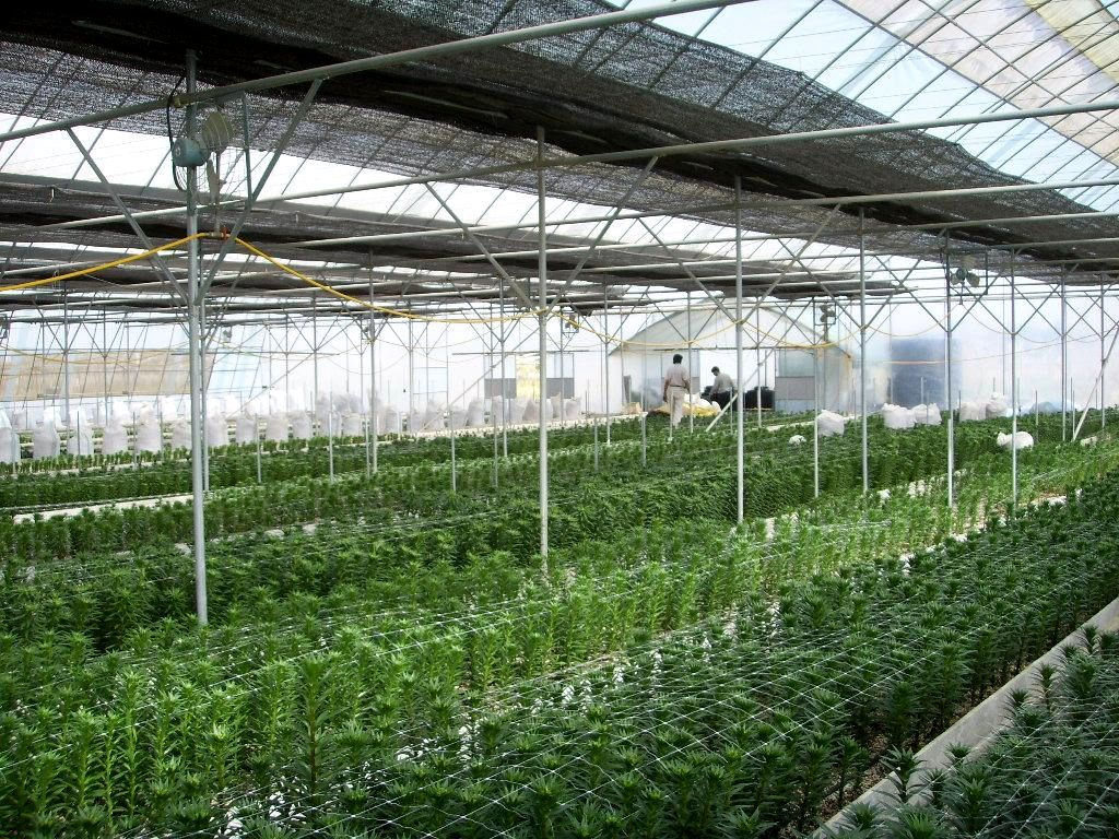 Commercial Greenhouse Environmental Control Gothic Arch
