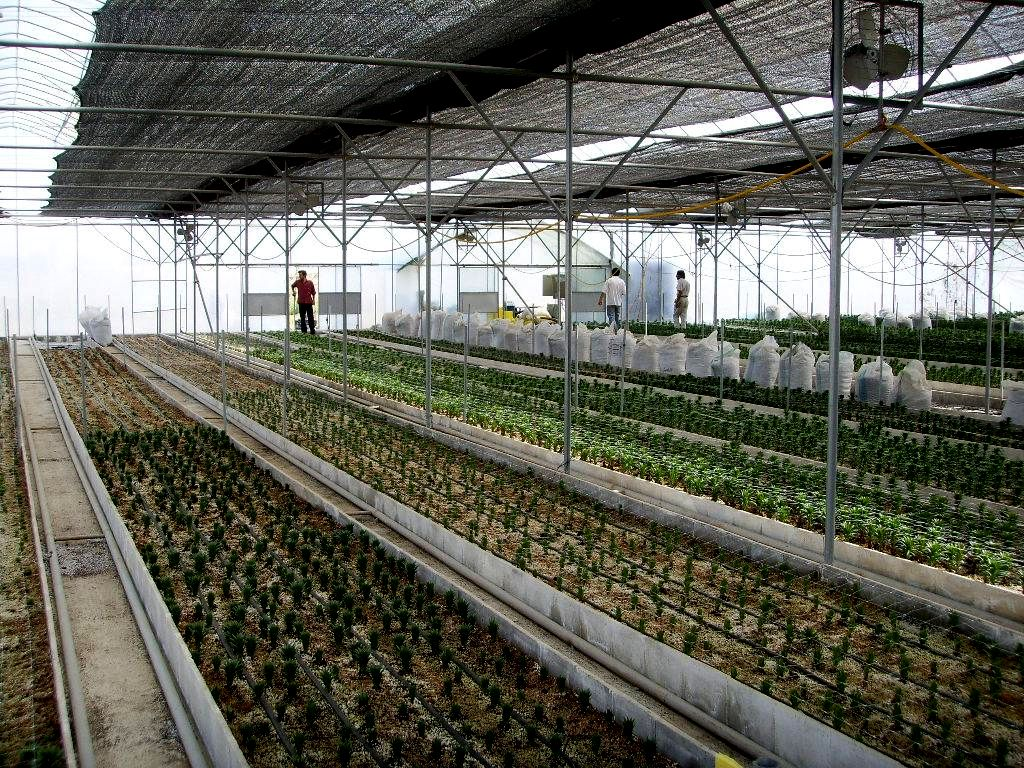 Commercial Greenhouse Environmental Control| Gothic Arch Greenhouses