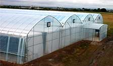 BK Greenhouse Structure and Covering