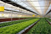 BK Greenhouses-Professional Greenhouses for professional growers