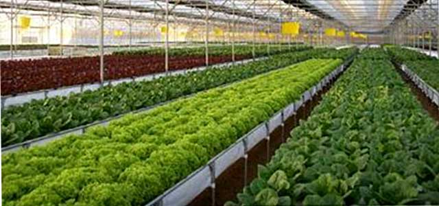 Hydroponics Systems and Supplies