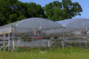 Commercial Greenhouse - Classic Plastic Greenhouse