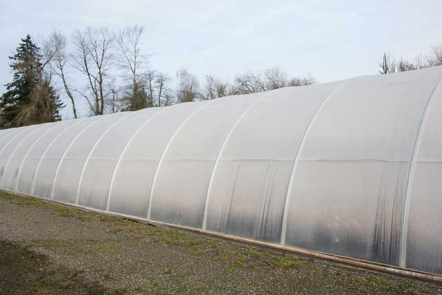 Cold Frame Greenhouse 1000| Gothic Arch Greenhouses