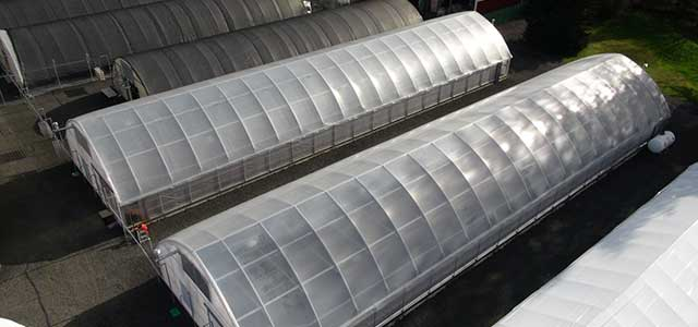 cold frame high tunnels
