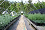 Commercial Greenhouse-Cold Frames & High Tunnels Greenhouses