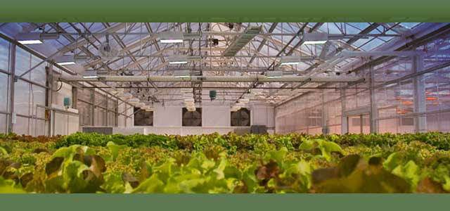 Commercial Greenhouse Grow light Complete Systems