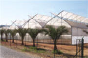 AT Greenhouses - Plastic Greenhouse