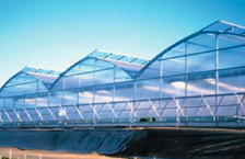 Commercial Greenhouse  - Gothic Archh Series 6500