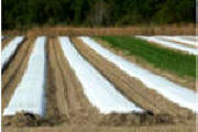 Crop Covers