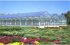 DF Series Greenhouses