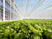 Production Greenhouses