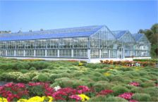 Commercial DF Series Greenhouses