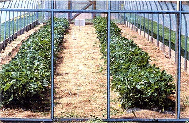 Eskay-Lite Vinyl Covering -Greenhouse covering