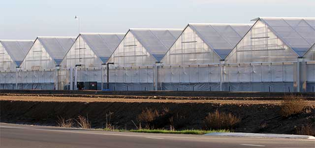 Gable Greenhouse 7500