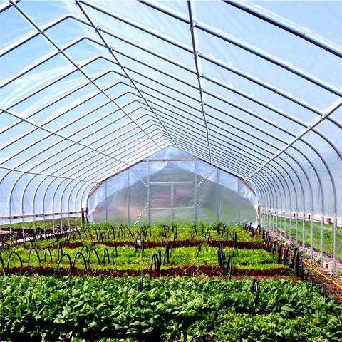 Gothic Cold Frame Gothic Arch Greenhouses