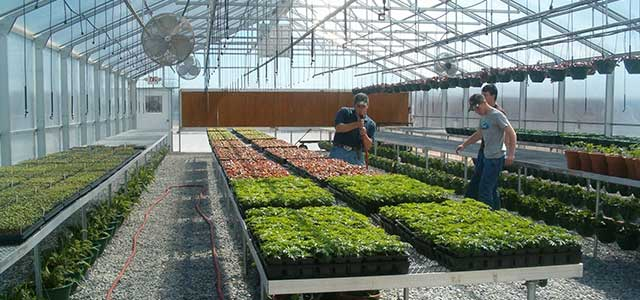 Retail Garden Greenhouses s