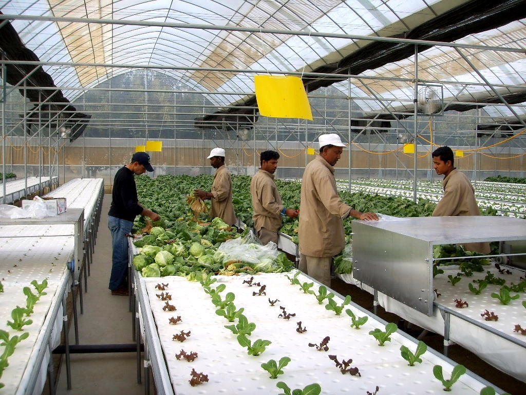 Hydroponics Systems Amp Greenhouse Gothic Arch Greenhouses