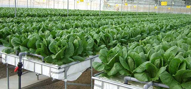 Hydroponics Systems & Supplies