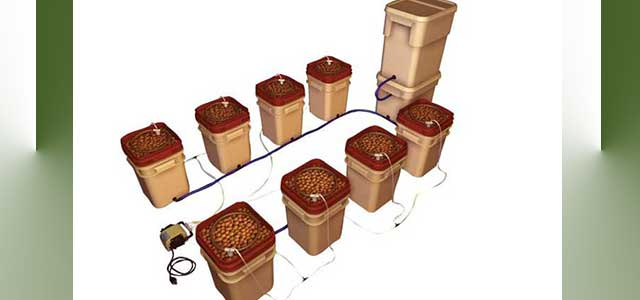 CSBT Dutch Bucket Grwoing Systems