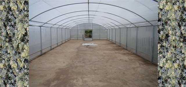 Anti Insect Screens Netting Gothic Arch Greenhouses