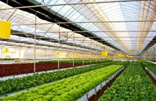 Commercial Greenhouse - Plastic BK Greenhouses