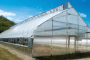 Commercial Greenhouse -Natural Ventilation greenhouses