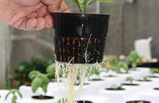 Hydroponic Growing Mediums
